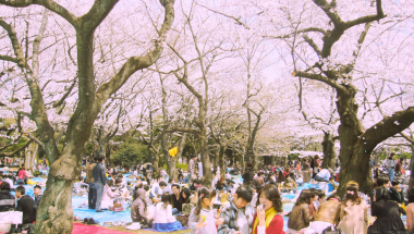 How to Hanami: A Guide to Cherry Blossom Season